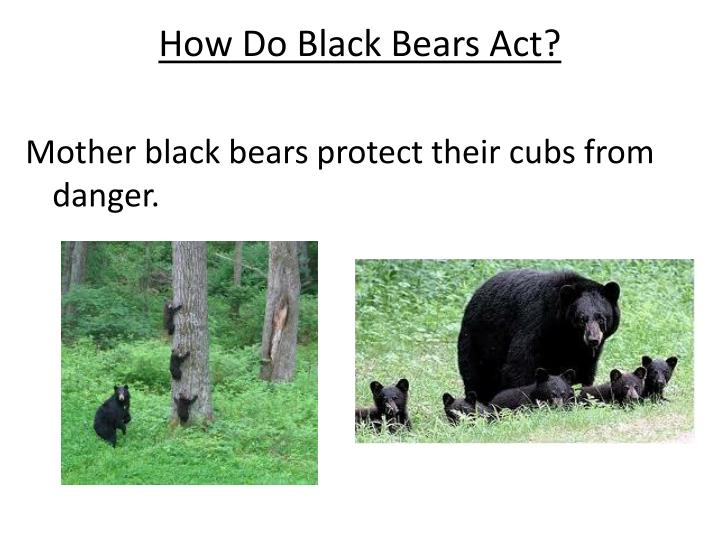 How Do Black Bears Act?