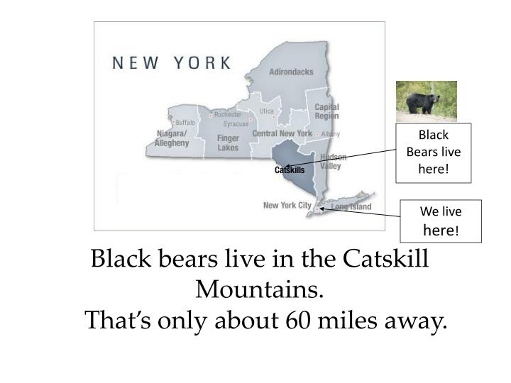 Black Bears live here!