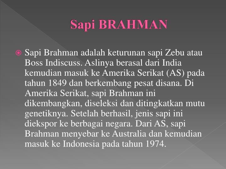 Sapi BRAHMAN