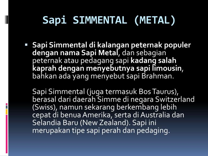 Sapi SIMMENTAL (METAL)