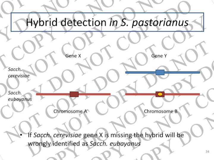 Hybrid detection