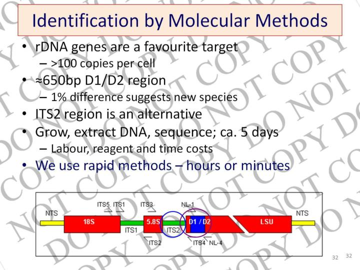 Identification by Molecular Methods