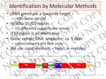 identification by molecular methods