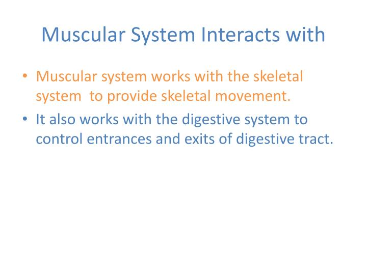 Muscular System Interacts with