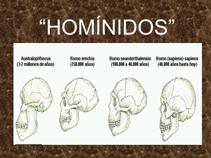 """""""HOMÍNIDOS"""""""
