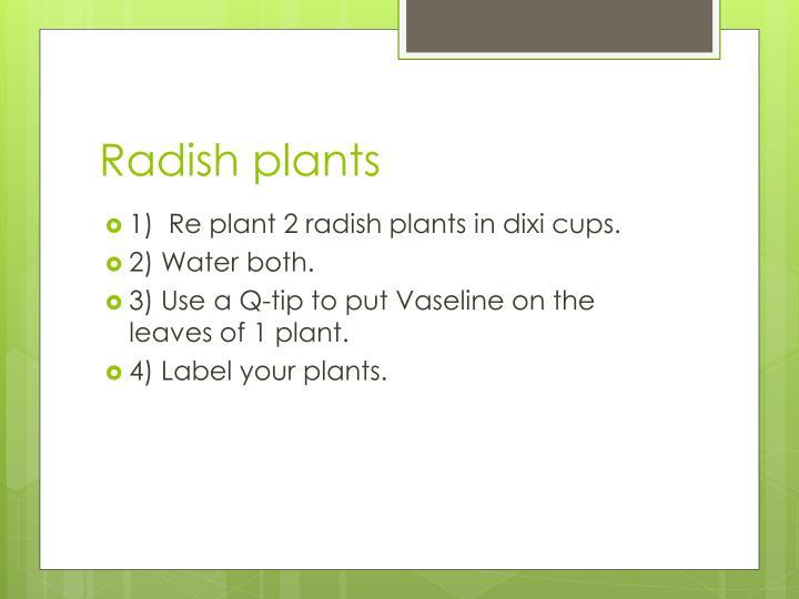 Radish plants