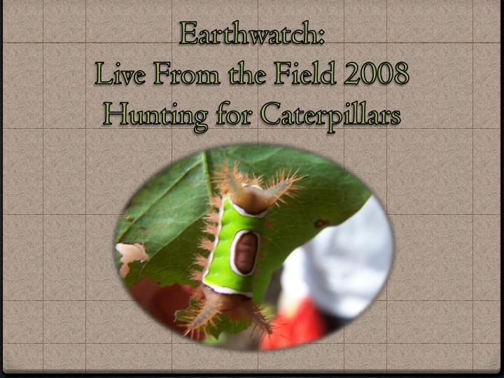 Earthwatch live from the field 2008 hunting for caterpillars