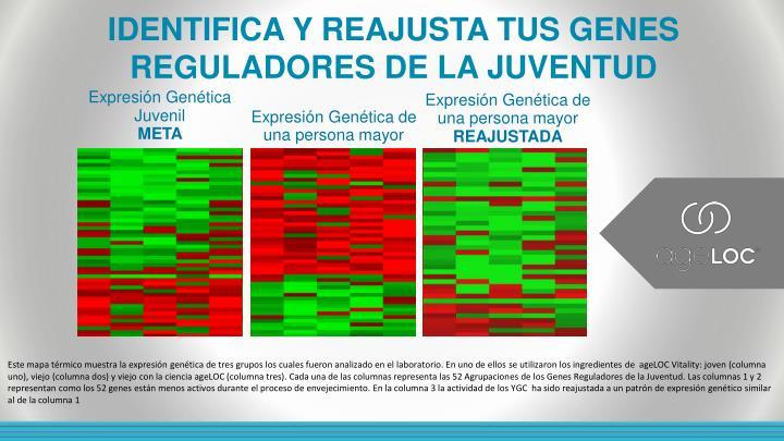 IDENTIFICA Y REAJUSTA TUS GENES REGULADORES DE LA JUVENTUD