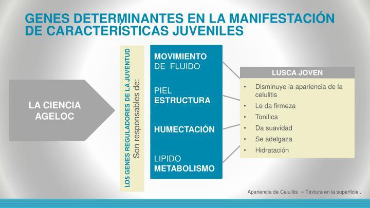 GENES DETERMINANTES EN LA MANIFESTACIÓN