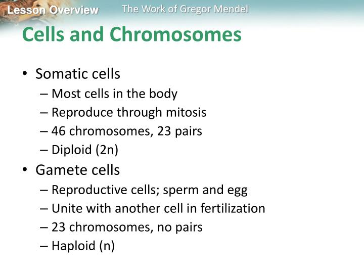 Cells and Chromosomes