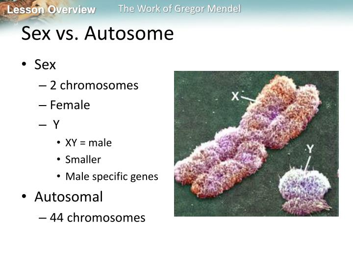 Sex vs. Autosome
