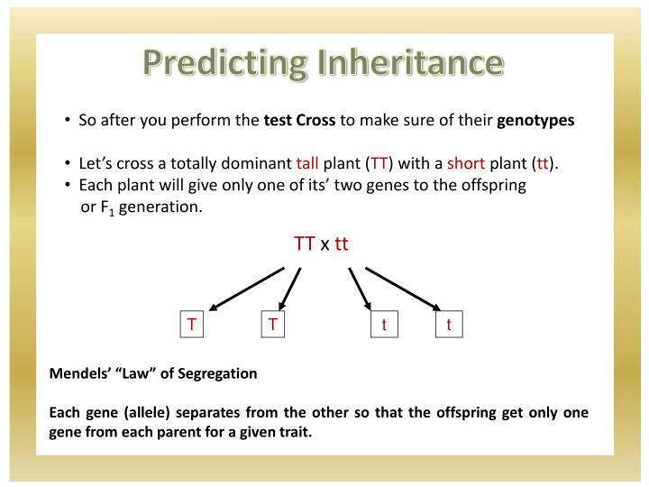 Predicting Inheritance