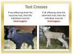 test crosses3