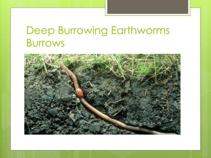 Deep Burrowing