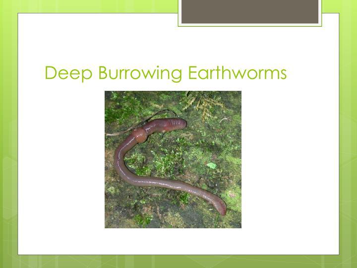 Deep Burrowing Earthworms