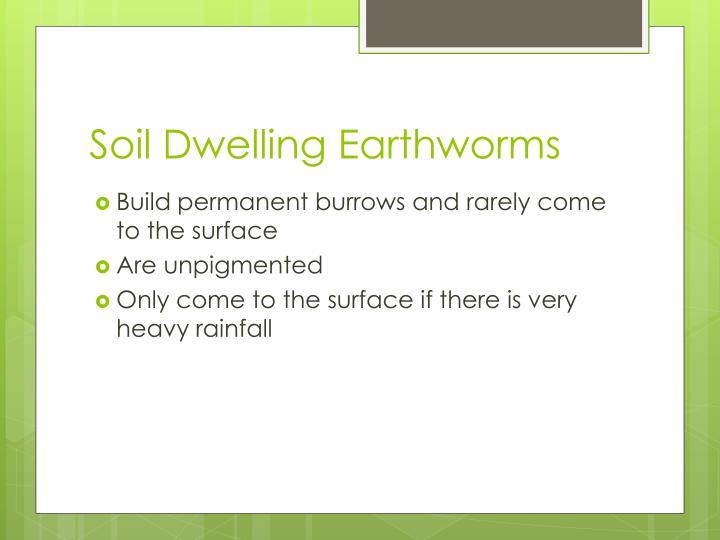 Soil Dwelling