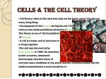 cells the cell theory
