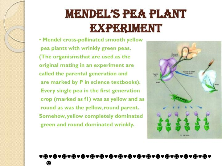 Mendel's Pea Plant Experiment