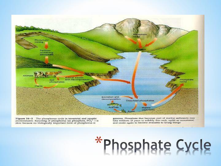 Phosphate Cycle