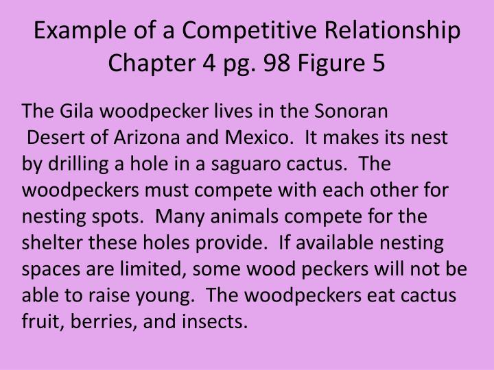 competitive relationship in the desert