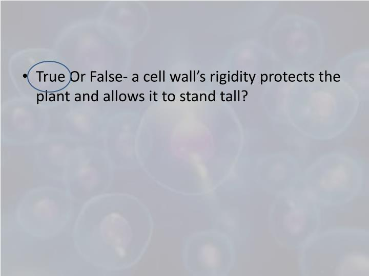 True Or False- a cell wall's rigidity protects the plant and allows it to stand tall?