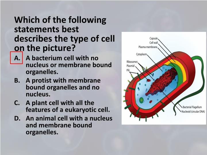 Which of the following statements best describes the type of cell on the picture?