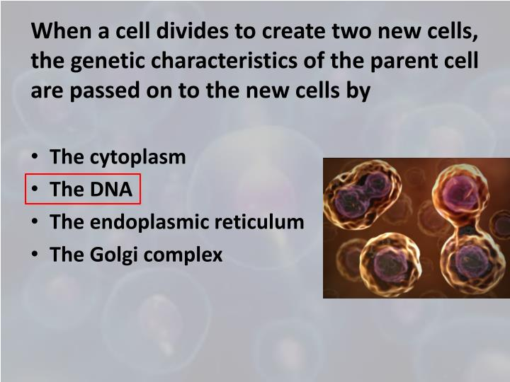 When a cell divides to create two new cells, the genetic characteristics of the parent cell are passed on to the new cells by