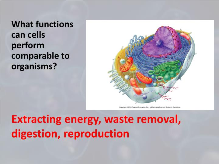 What functions can cells perform comparable to organisms?