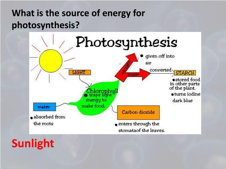 What is the source of energy for photosynthesis?