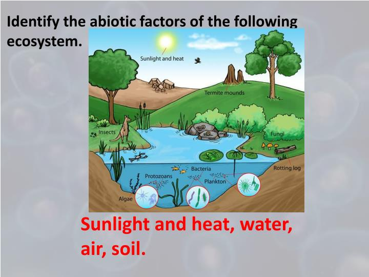 Identify the abiotic factors of the following ecosystem.