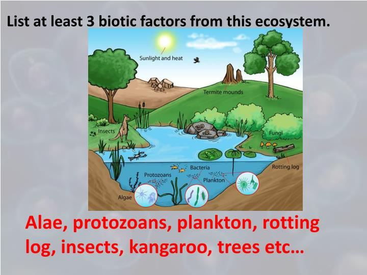 List at least 3 biotic factors from this ecosystem.