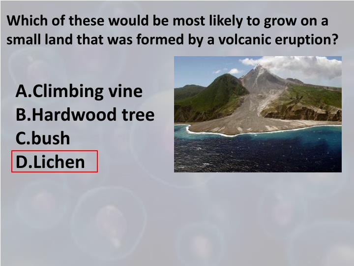 Which of these would be most likely to grow on a small land that was formed by a volcanic eruption?