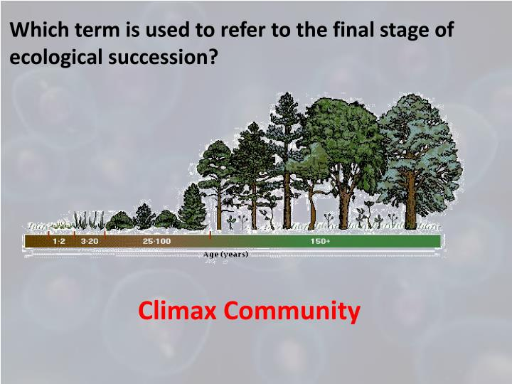 Which term is used to refer to the final stage of ecological succession?