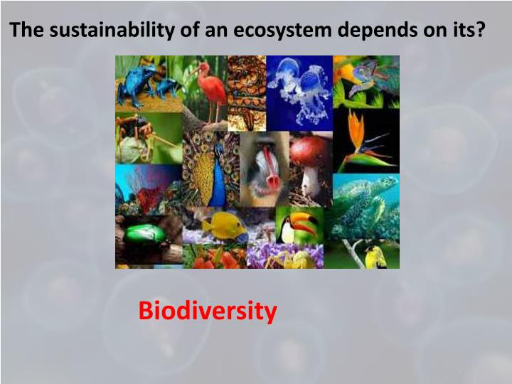 The sustainability of an ecosystem depends on its?