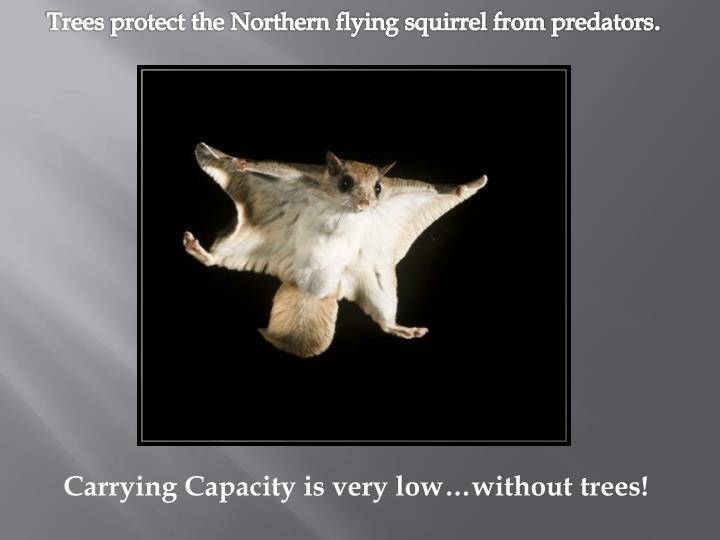 Trees protect the Northern flying squirrel from predators