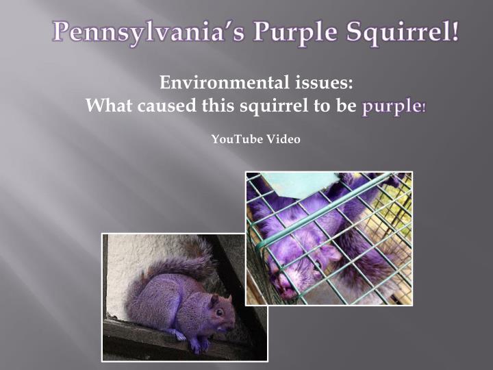 Pennsylvania's Purple Squirrel!