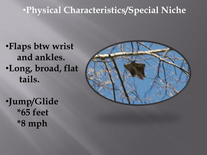 Physical Characteristics/Special Niche