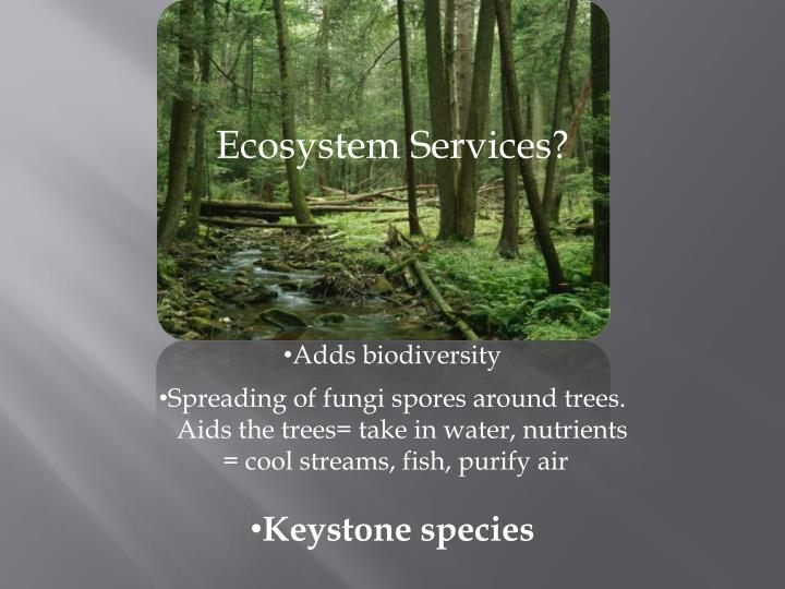 Ecosystem Services?