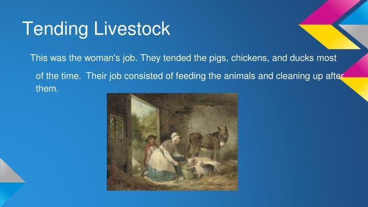 Tending Livestock