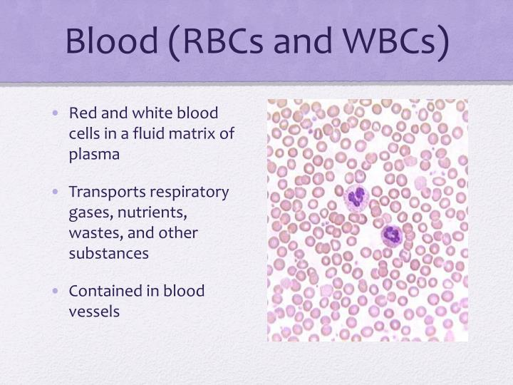 Blood (RBCs and WBCs)