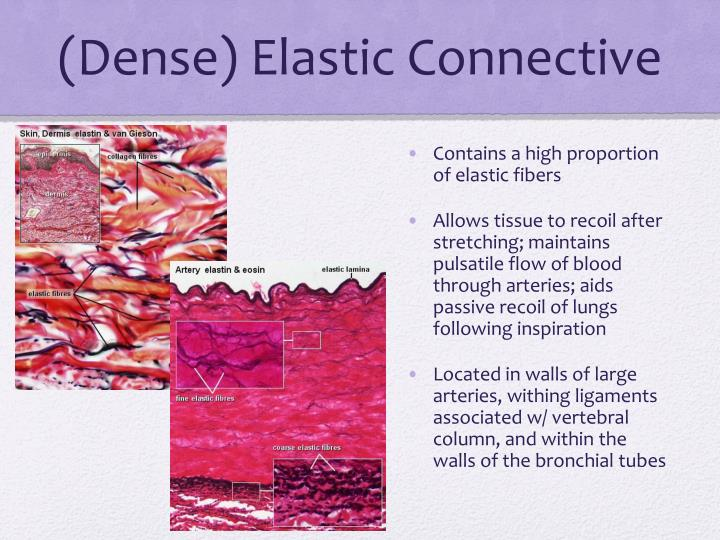 Dense elastic connective