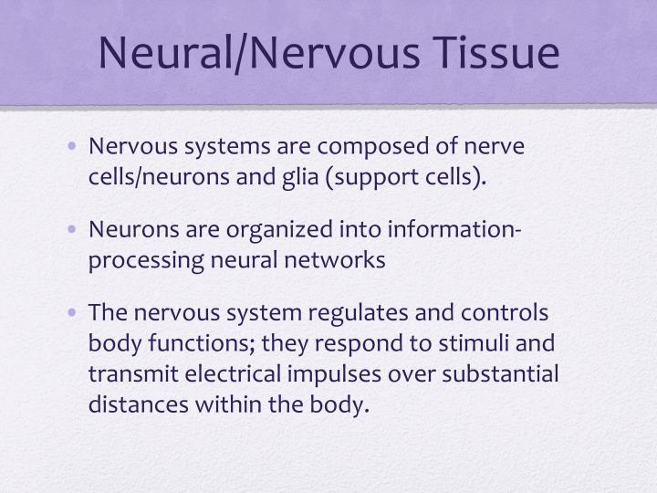 Neural/Nervous Tissue