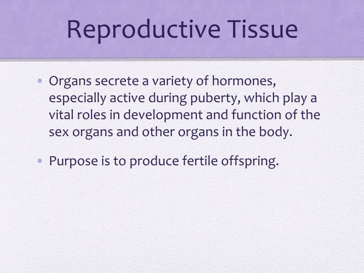 Reproductive Tissue