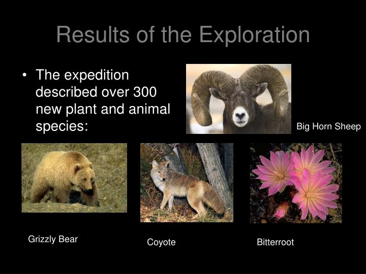 Results of the Exploration