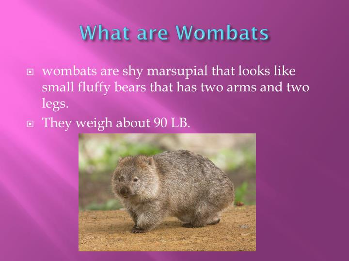 What are wombats