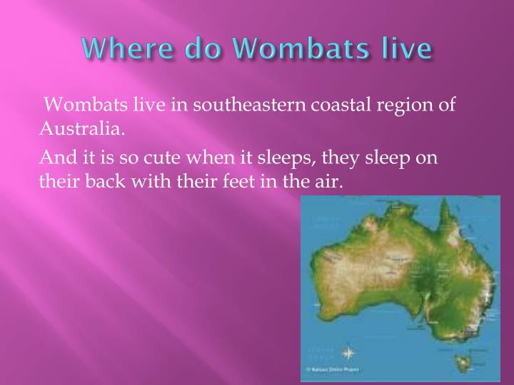 Where do Wombats live