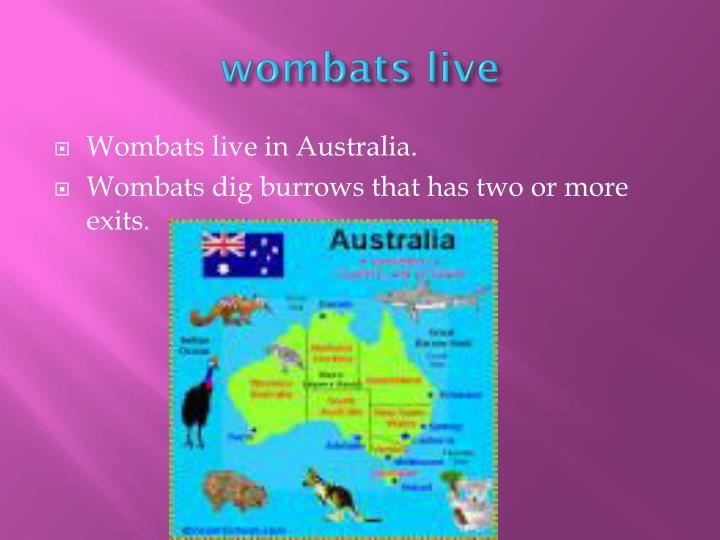 wombats live