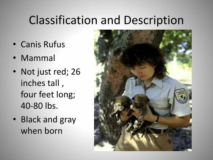 Classification and Description