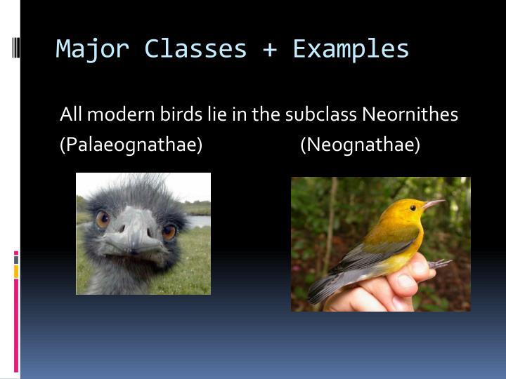Major Classes + Examples