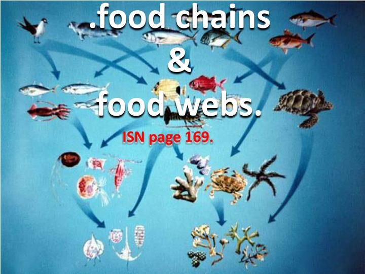 Food chains food webs